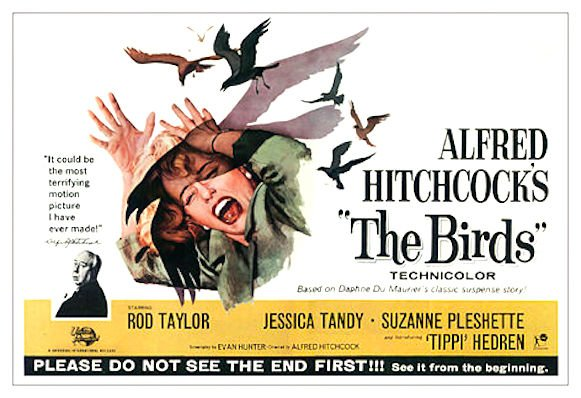 The birds (Hitchcock) movie poster, 1965