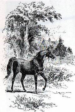 black beauty anna sewell illustration