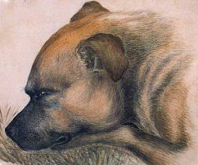 Keeper-Emily Bronte's dog