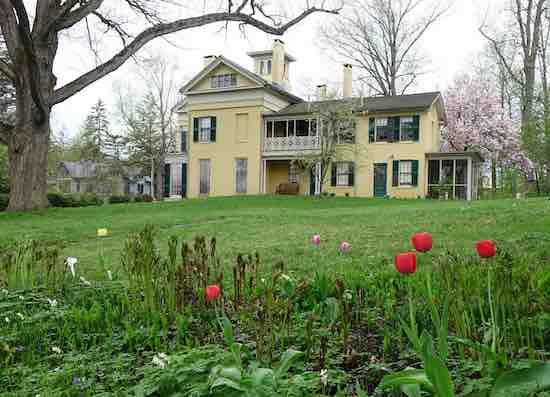 Emily Dickinson Museum Spring Tulips